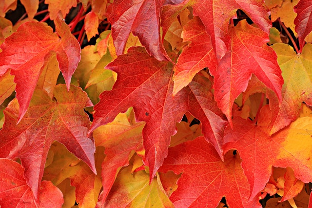 How to Prepare Your Plumbing for Autumn